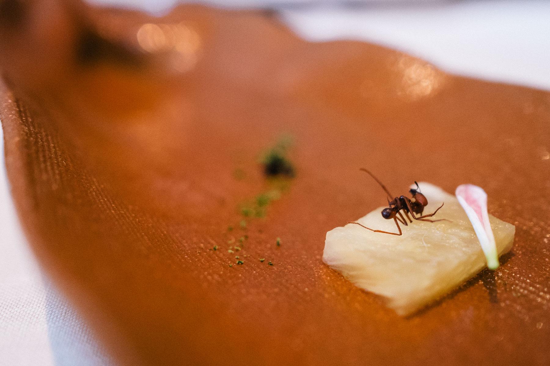sao-paulo-worlds-best-restaurant-dom-brazil-brasil-michelin-star-13